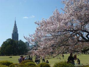 二期の会「新宿御苑の八重桜を見る会」の報告